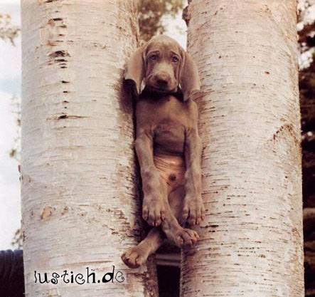 baumhund.jpg